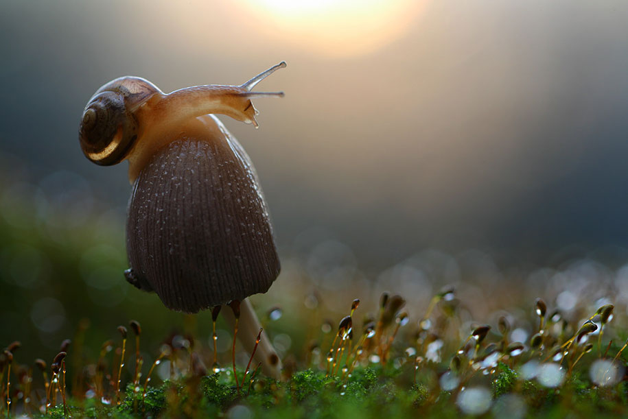 bugs-snails-mushrooms-macro-photography-nature-vadim-trunov-9