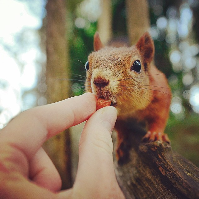 Squirrel Whisperer Photographer Feeds Wild Animals To