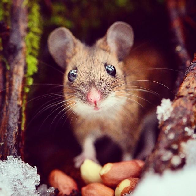 Finnish konsta punkka wildlife wildlife animals wildlife photography