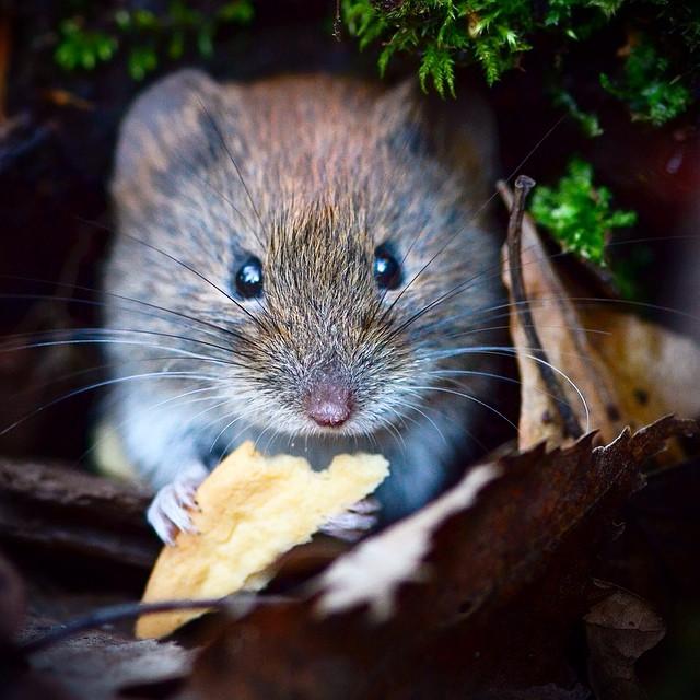 finnish-wildlife-feeding-squirrel-whisperer-konsta-punkka-20