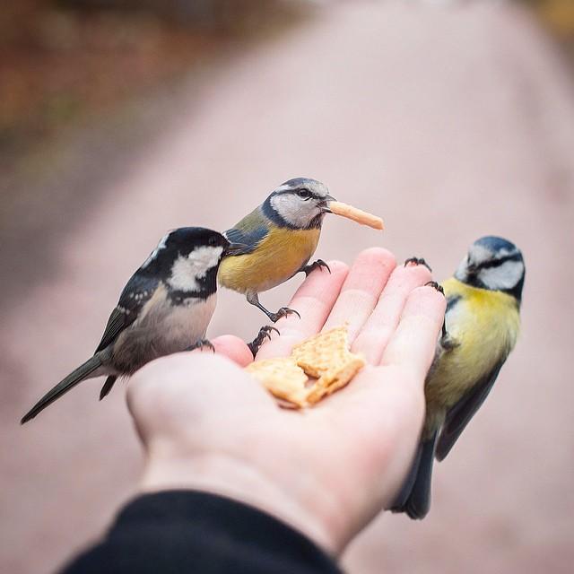 finnish-wildlife-feeding-squirrel-whisperer-konsta-punkka-25