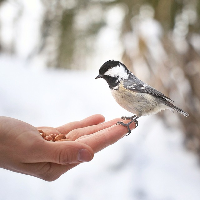 finnish-wildlife-feeding-squirrel-whisperer-konsta-punkka-33