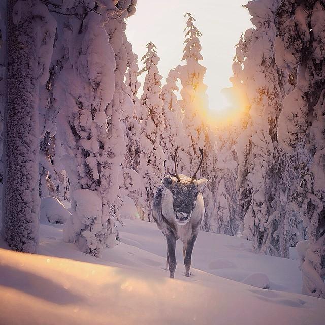 finnish-wildlife-feeding-squirrel-whisperer-konsta-punkka-46