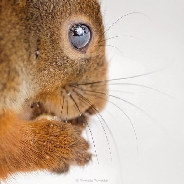 finnish-wildlife-feeding-squirrel-whisperer-konsta-punkka-50