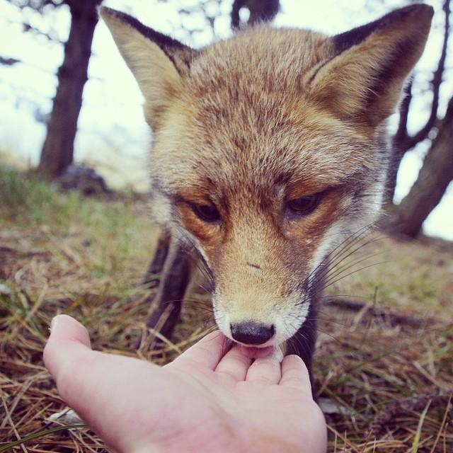 finnish-wildlife-feeding-squirrel-whisperer-konsta-punkka-6