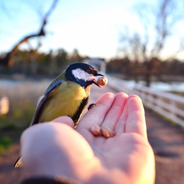finnish-wildlife-feeding-squirrel-whisperer-konsta-punkka-7