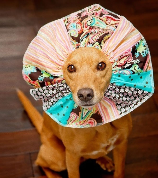 Pet Cones That Your Pets Will Love To Hate - Dog portrait photography shows how they hate wearing the cone of shame
