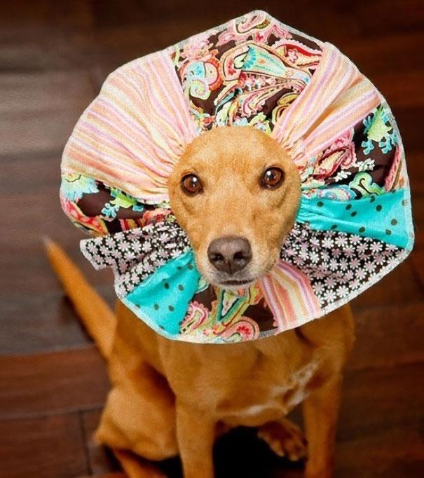 funny-pet-cones-creative-elizabethan-collars-10