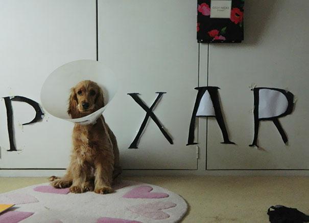 funny-pet-cones-creative-elizabethan-collars-2