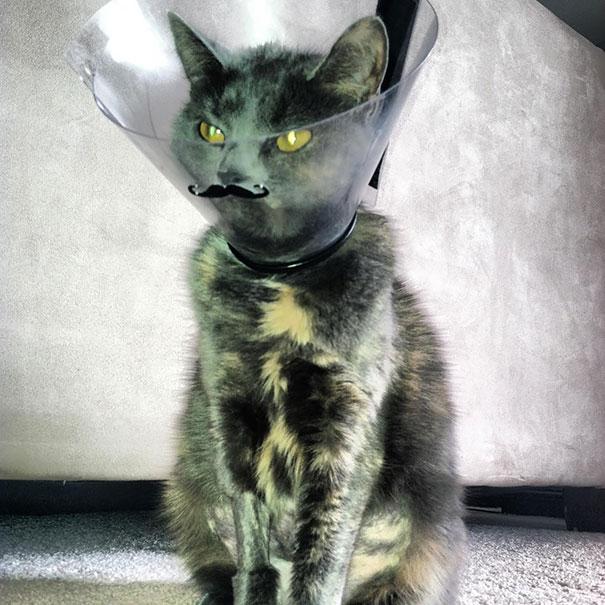 funny-pet-cones-creative-elizabethan-collars-3