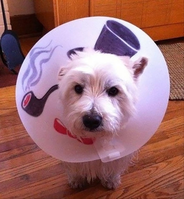 Make A Dog Cone Collar