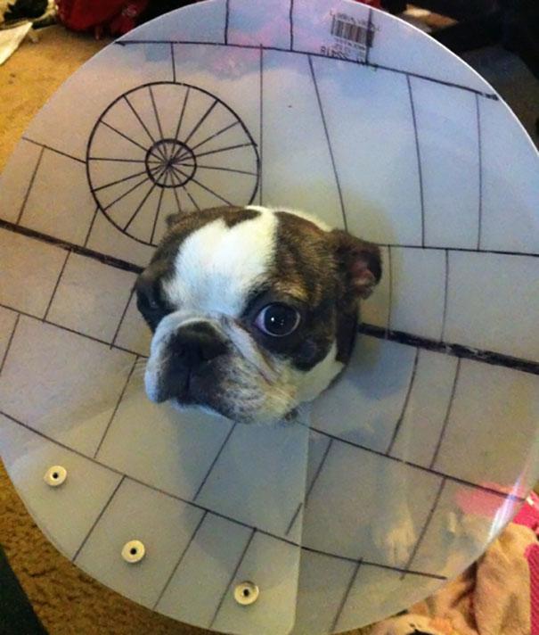 funny-pet-cones-creative-elizabethan-collars-5