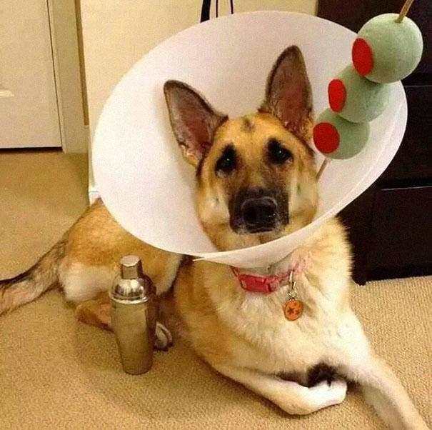 funny-pet-cones-creative-elizabethan-collars-8