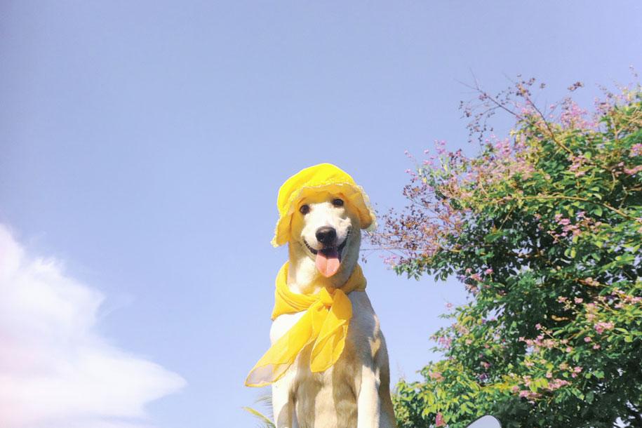 happy-dog-photography-gluta-thailand-12
