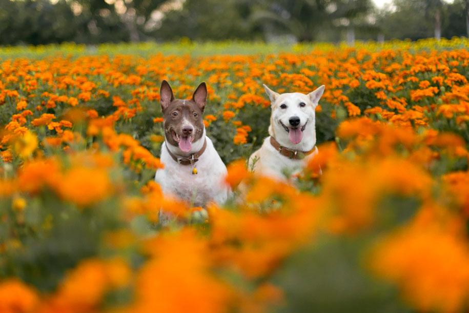 happy-dog-photography-gluta-thailand-24