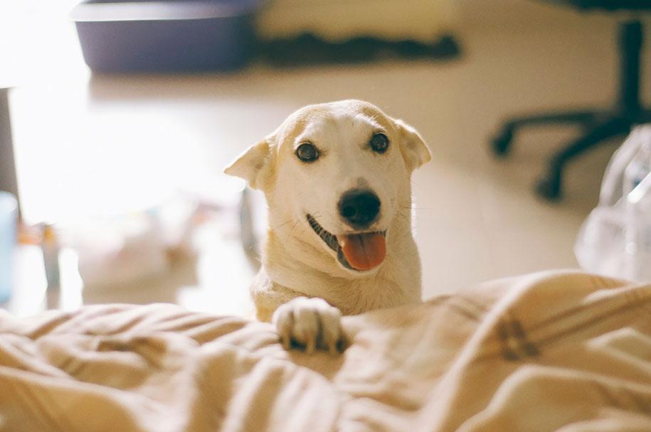 happy-dog-photography-gluta-thailand-25