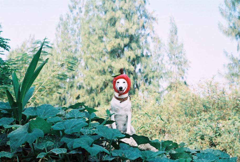 happy-dog-photography-gluta-thailand-8
