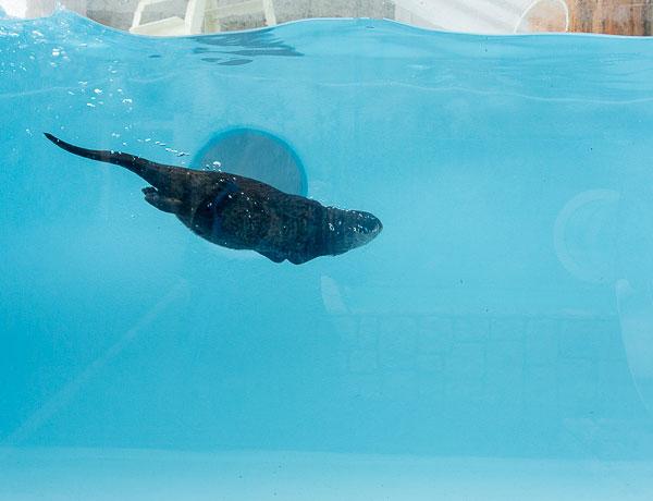 roundabout-aquarium-design-otter-zoo-kohan-studio-3