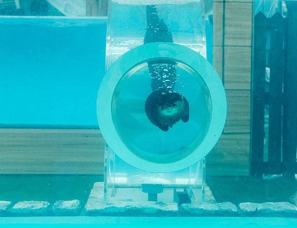 roundabout-aquarium-design-otter-zoo-kohan-studio-6