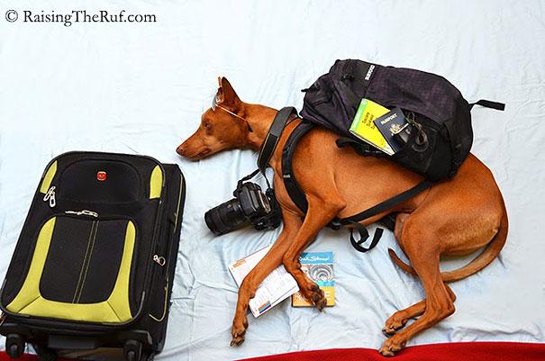 rufus-sleeping-dog-photography-animals-sara-rehnmark-1