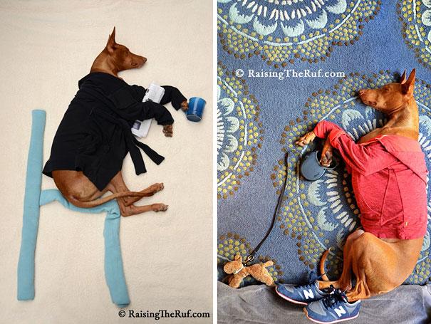 rufus-sleeping-dog-photography-animals-sara-rehnmark-10-1