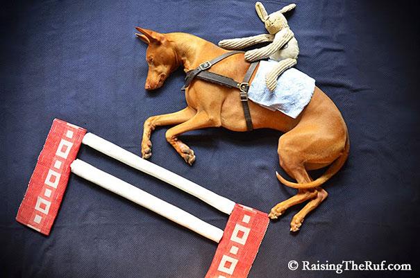 rufus-sleeping-dog-photography-animals-sara-rehnmark-5