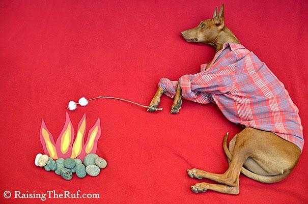 rufus-sleeping-dog-photography-animals-sara-rehnmark-6
