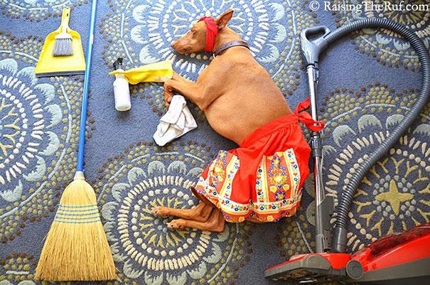 rufus-sleeping-dog-photography-animals-sara-rehnmark-7
