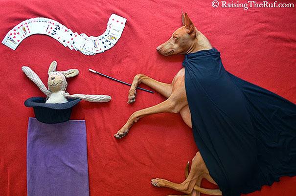 rufus-sleeping-dog-photography-animals-sara-rehnmark-8