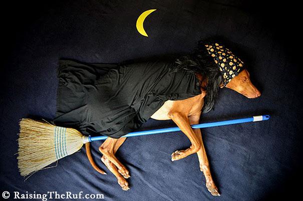rufus-sleeping-dog-photography-animals-sara-rehnmark-9