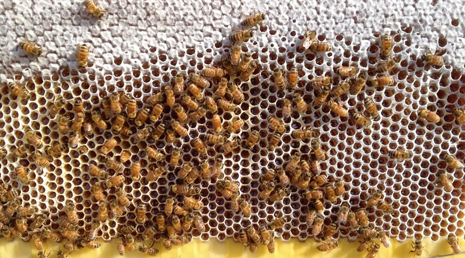bees-easy-honey-tap-flow-hive-stuart-cedar-anderson-7