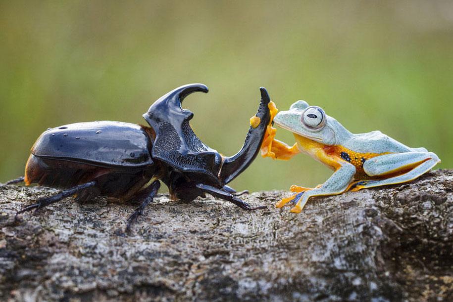 frog-beetle-rodeo-hendy-mp-1