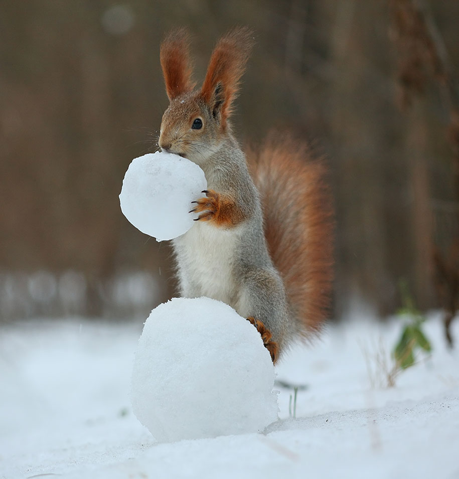 macro-photography-squirrel-vadim-trunov-russia-10