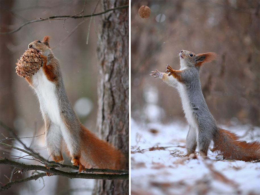 macro-photography-squirrel-vadim-trunov-russia-14