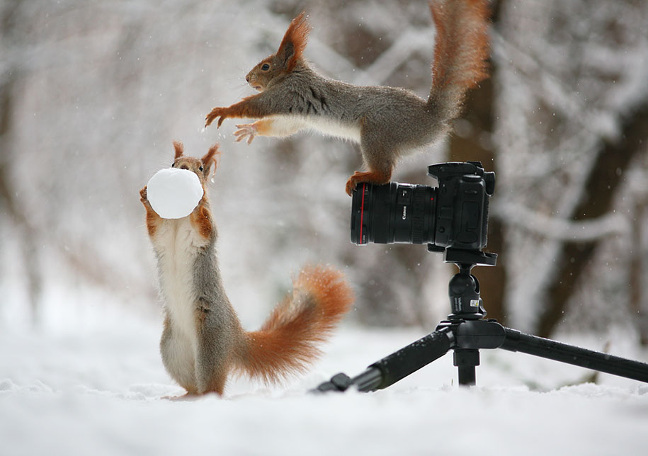 macro-photography-squirrel-vadim-trunov-russia-2