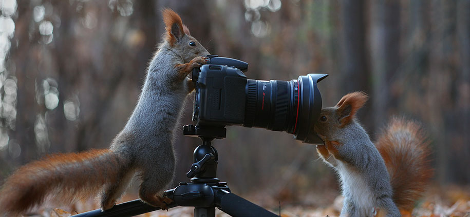 macro-photography-squirrel-vadim-trunov-russia-7