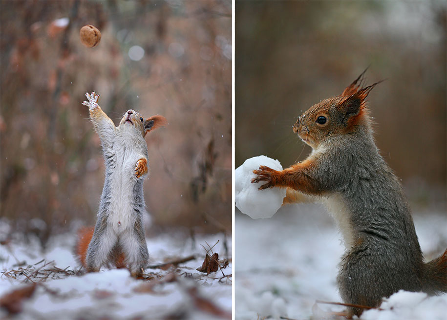 macro-photography-squirrel-vadim-trunov-russia-8