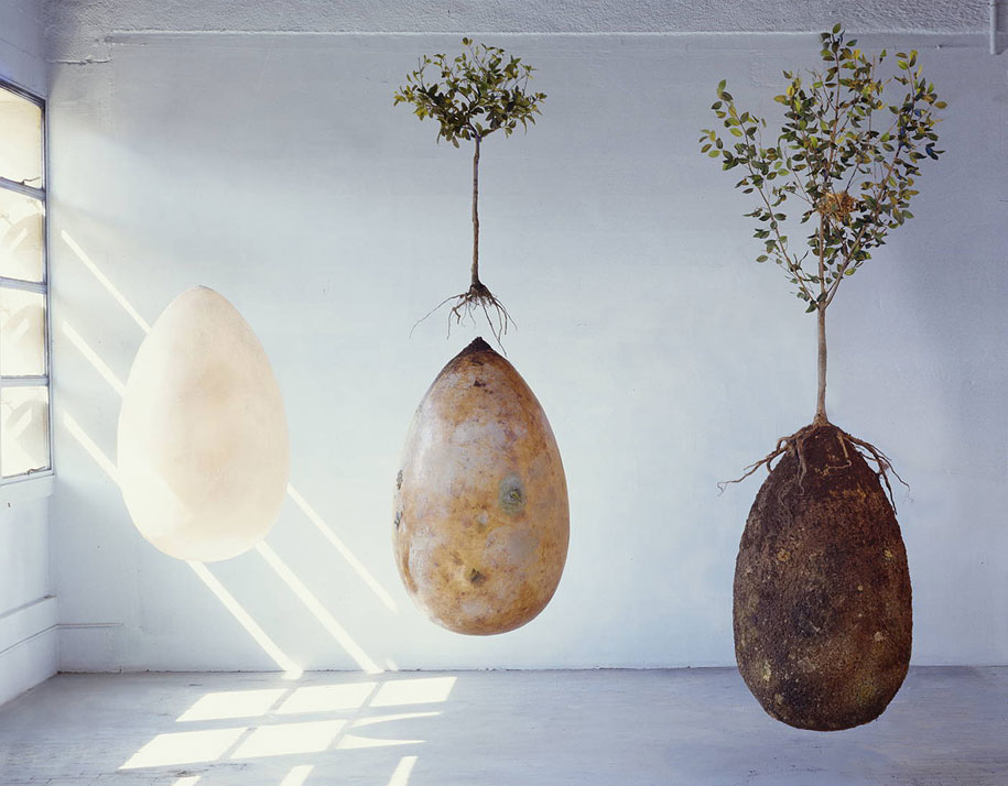 sacred-memory-forest-biodegradable-burial-pod-capsula-mundi-8
