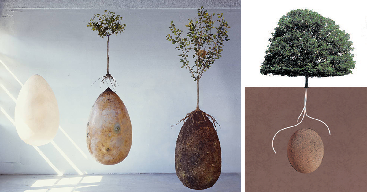 no more coffins these organic burial pods turn cemetery
