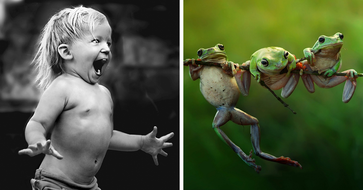 25 Of The Best Shortlisted Photos From The 2015 Sony World