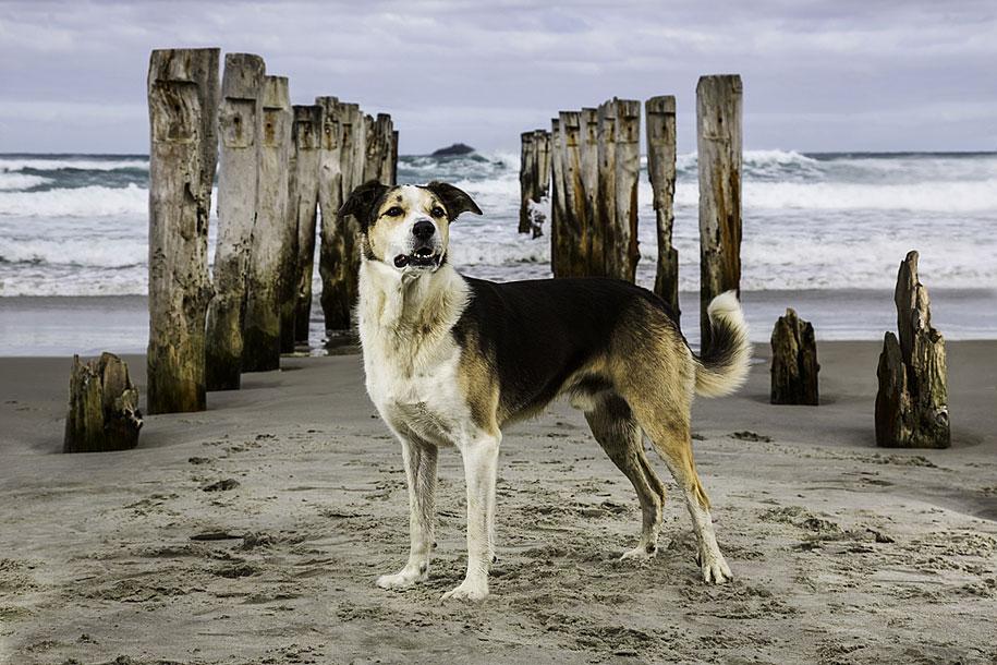 working-dog-animals-shepherds-realm-andrew-fladeboe-2