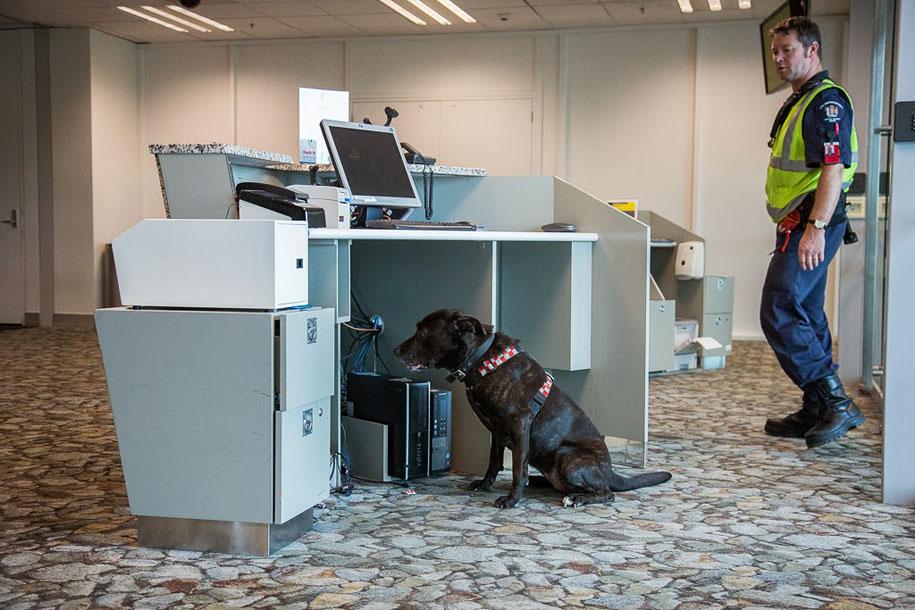 working-dog-animals-shepherds-realm-andrew-fladeboe-25