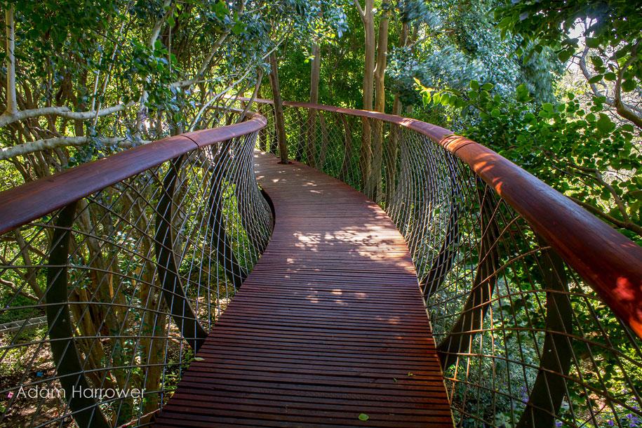 fantastic-centenary-tree-canopy-walkway-kirstenbosch-10