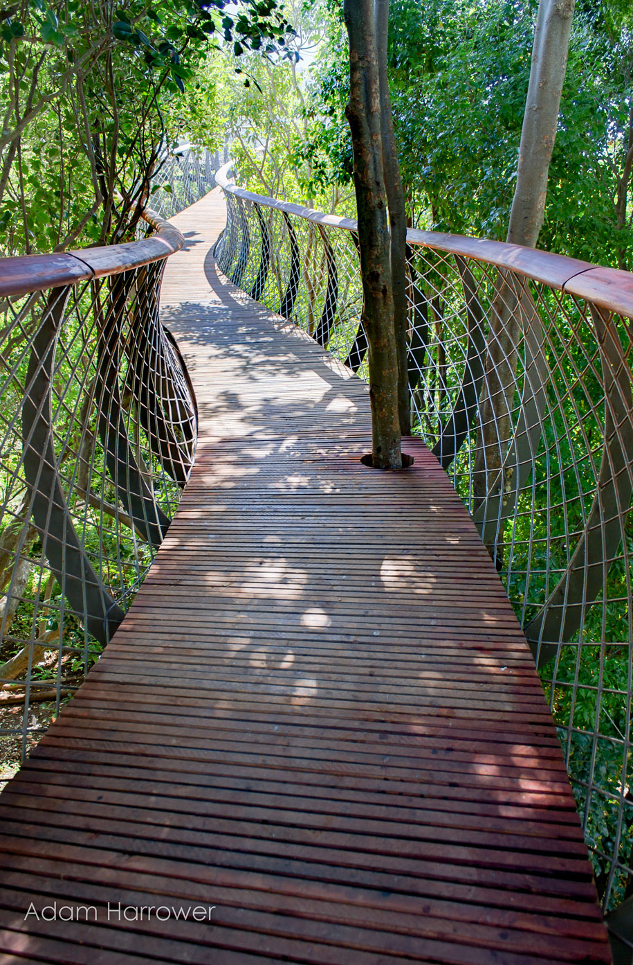 fantastic-centenary-tree-canopy-walkway-kirstenbosch-12