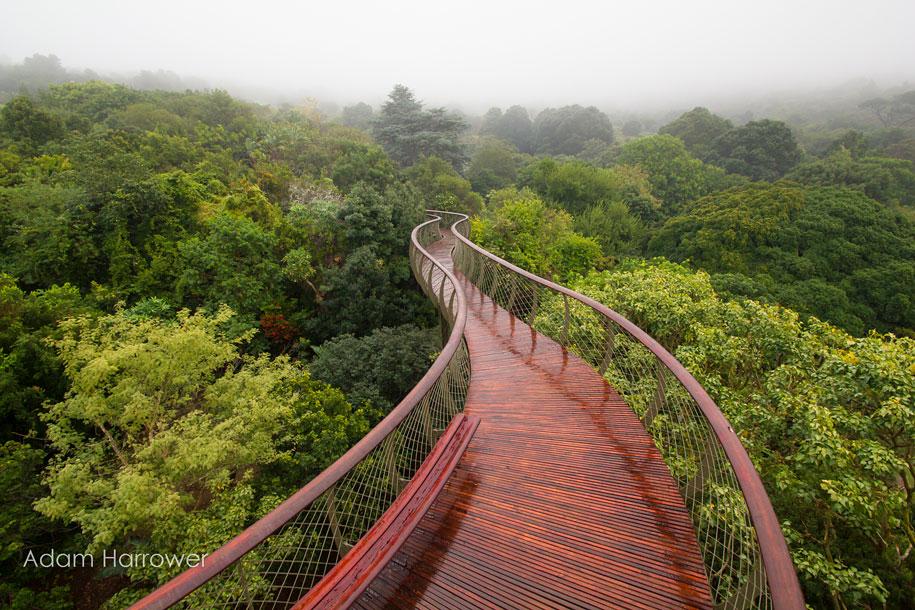 fantastic-centenary-tree-canopy-walkway-kirstenbosch-27