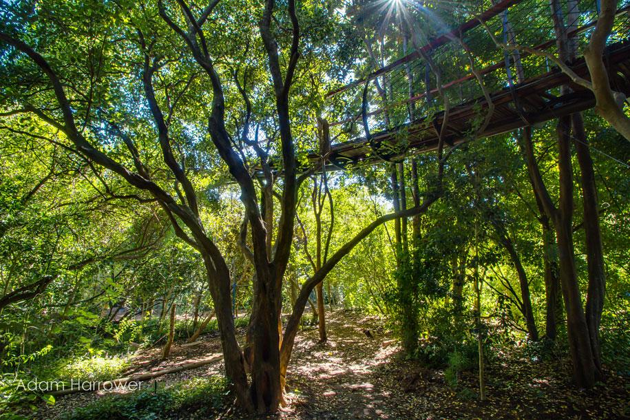 fantastic-centenary-tree-canopy-walkway-kirstenbosch-3