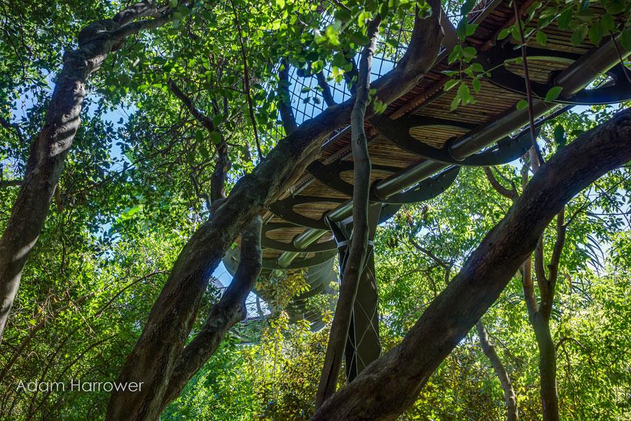 fantastic-centenary-tree-canopy-walkway-kirstenbosch-4