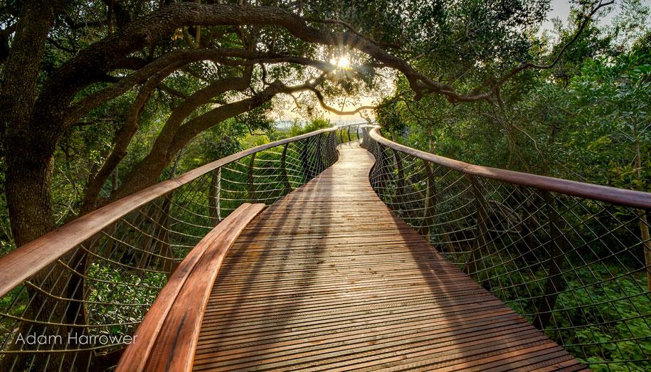 fantastic-centenary-tree-canopy-walkway-kirstenbosch-43