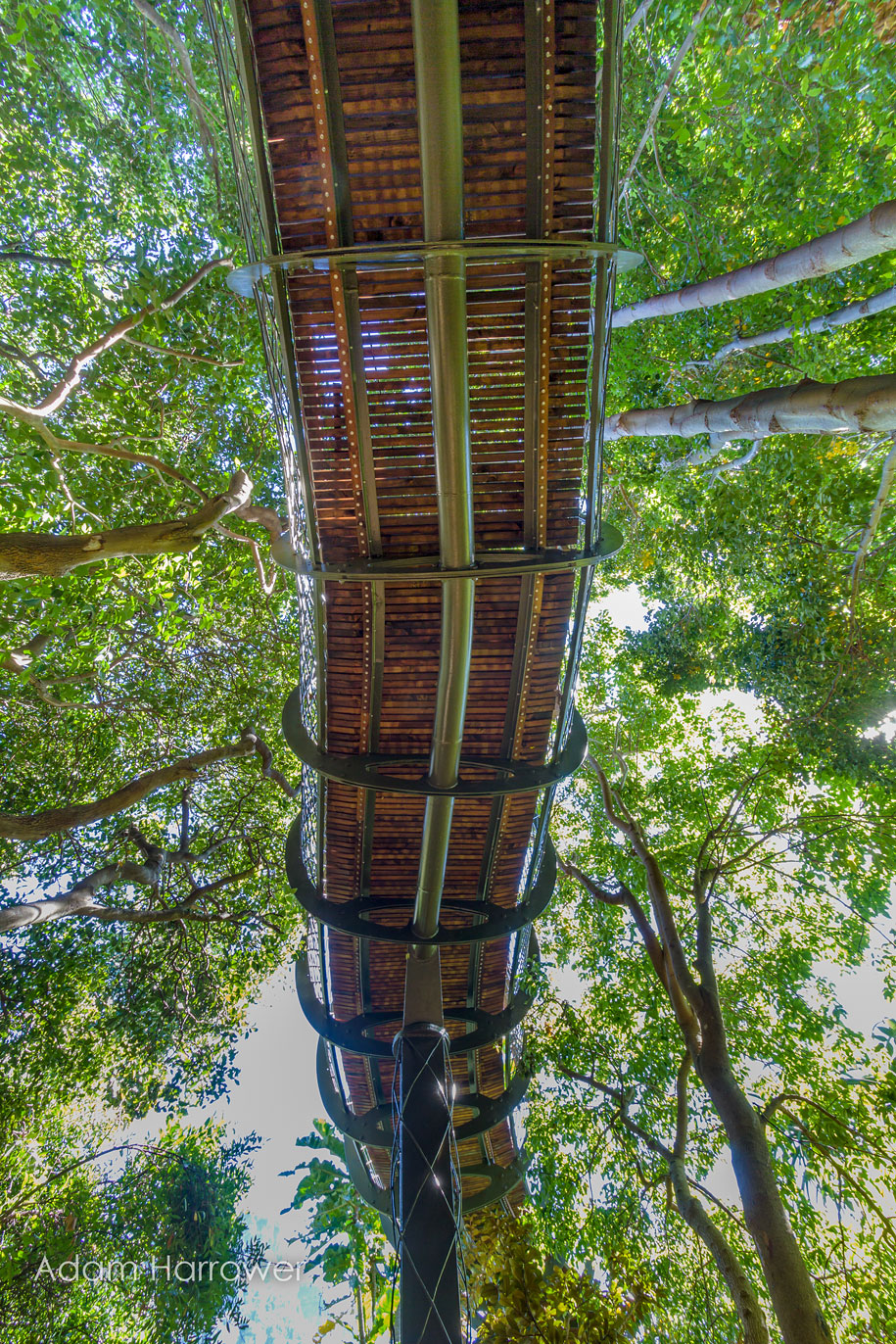 fantastic-centenary-tree-canopy-walkway-kirstenbosch-7