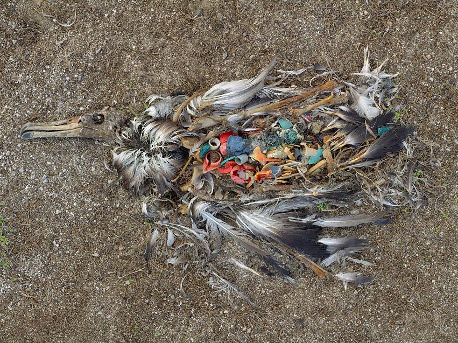 poluição-trash-destruição-overdevelopement-superpopulação-superação-17
